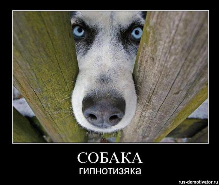 Собачий портрет - Страница 19 141876-3f8e4-62474553-m750x740-u4d65f