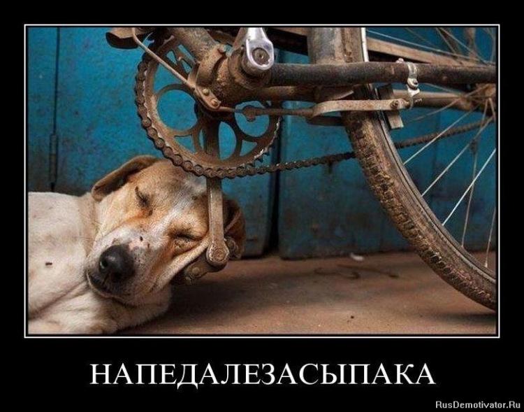 Собачий портрет - Страница 19 141876-a38c9-62526700-m750x740-u4de60