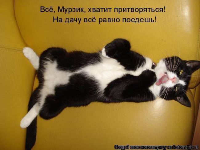 http://data19.gallery.ru/albums/gallery/161592-d4eb3-54776930-m750x740-u6ebdb.jpg