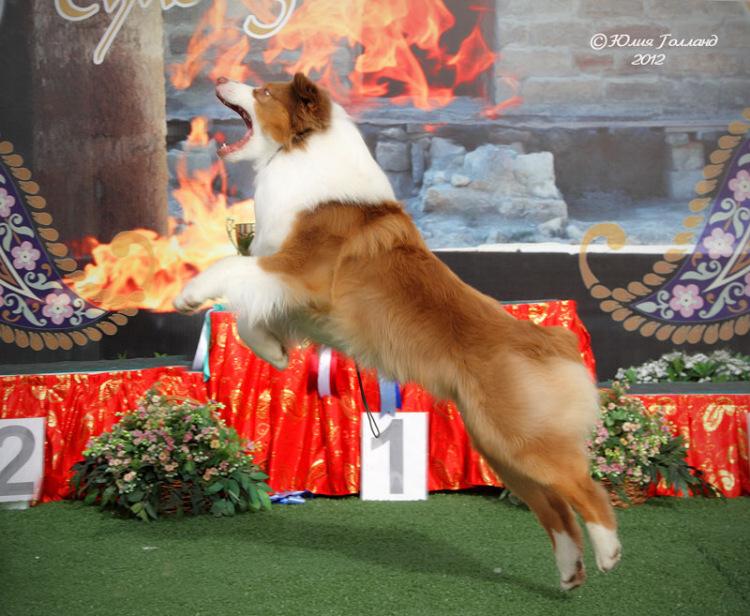 Выставочные успехи наших собак - 3 - Страница 4 205407-a7480-55770515-m750x740-u8abcf