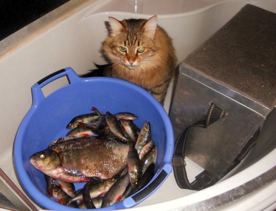 как котенок рыбу ловили