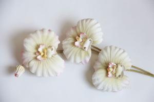 Орхидеи       - Страница 3 301078-85baa-55683520-h200-ucd1e1