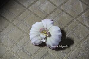 Орхидеи       - Страница 3 301078-8892b-55577103-h200-u595f6