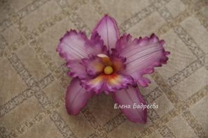 Орхидеи       - Страница 3 301078-9b75a-54948772-h200-u0445d